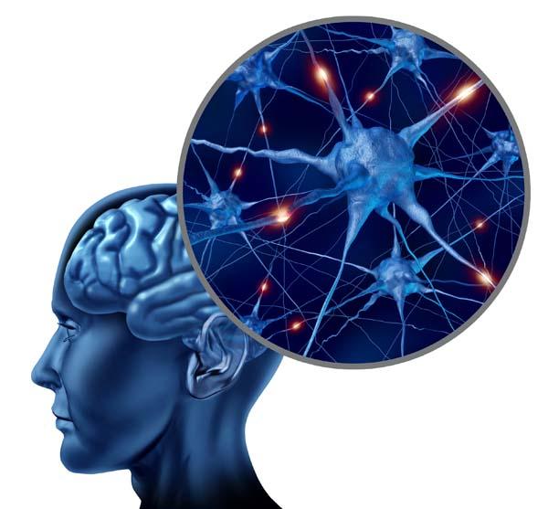 Extra Brainy kapszula agyi vérkeringésre