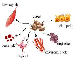 őssjetek és szervek kapcsolata