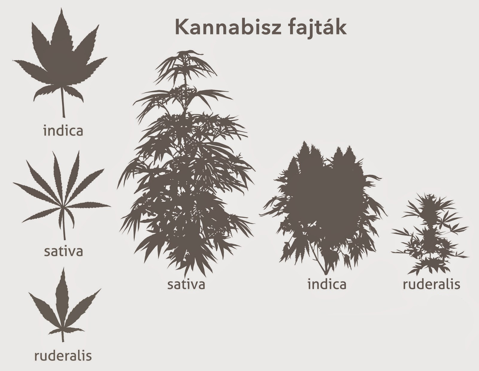 Cannabis CBD Kendermag, Medicannabis